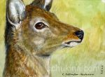 ACEO Deer by sschukina