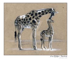 Visions of Africa - Parenthood by FerBarchetta