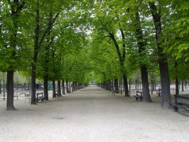 Avenue of Trees by FyreLiLi