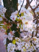 Blossoms in Huntington by GUDRUN355