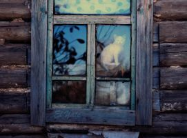 cat in window by goraakkaya