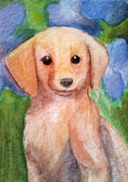 Labrador Puppy ACEO *FOR SALE* by OllyChimera