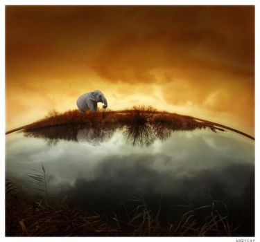 Elephant by Andycap