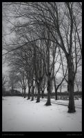 ID564 Trees Line in Snow by Deviant-Darkr