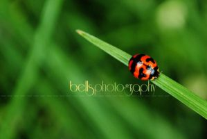 A LADY BUG'S LIFE by bells31ita