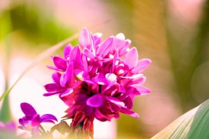 Earthly Orchid by adaosalles