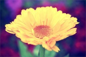 a yellow flower by Harinejumi