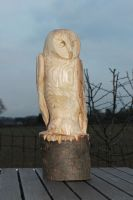 Barn owl by ArrowTurtle