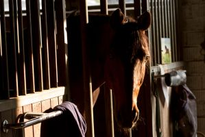 Bay Horse Stable Light Stock by LuDa-Stock