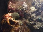 Hermit crabs by Psychographer16