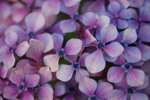 Flower's texture Stock 2 by Nataly1st