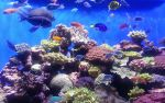 Coral Reefs by bryceguy72