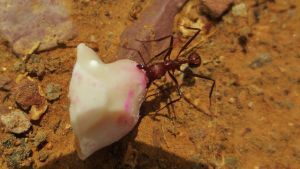 Close-Up Ant by piperpiper7