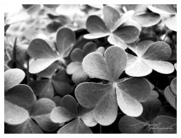 Shamrock by Saswat777