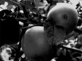Apples by abreathoutofacoma