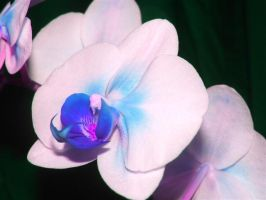 Orchid 5 by emzily1