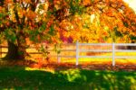 Tree and White Fence by sphinx000514