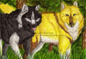 Double ACEO - Feya and Wolven by 8TwilightAngel8