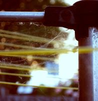 Spider Web 4 by MegBethany