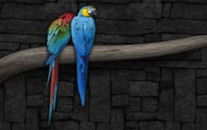 Parrots_Widescreen_by_Sed_rah