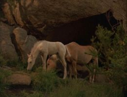 King of the Cascade Brumbies. by TheSilver-BrumbyClub