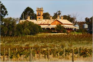 Winery - Rutherglen by wildplaces