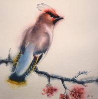 waxwing by jennomat