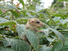 Little Forest Mouse by Enforcer010