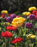 Colors of Spring by JoanneAugustine
