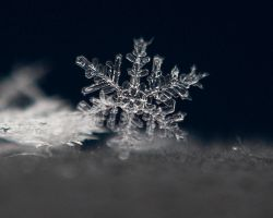 Snowflake Macro Crop by DARRYL-SMITH