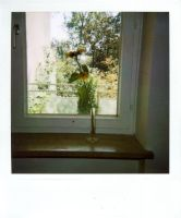 polaroid no.1 by herbstkind