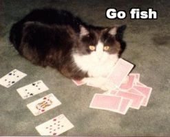 LOLcats - Go Fish by mamaslyth