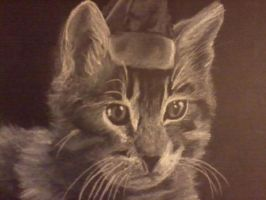 Charcoal Cat by emollience