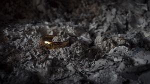 The One Ring by Danimatie