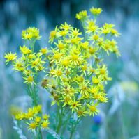Yellow flowers stock by Quinnphotostock