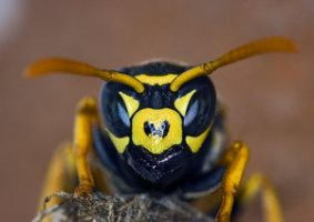 Bees and flies: 1st place by Insect-Lovers-Club
