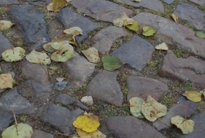 Street and leaves II by Dorian-Gray7
