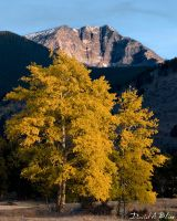 Fall Aspens in RMNP by shiverfix