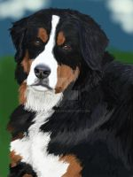 Bernese Mountain Dog Portrait by Be-Lyle