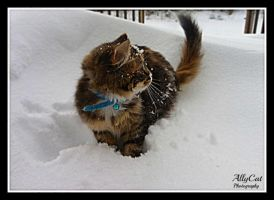 Bella's First Snow by AllyCat1994