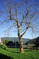 Arbre Friesach by Wendybell80