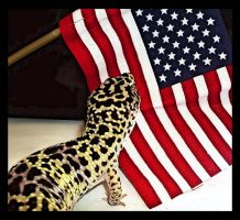 Patriotic Gecko by Unicornia