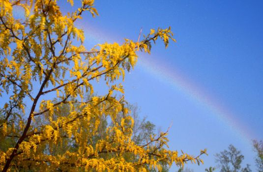 Gold at the end of the Rainbow by KeswickPinhead