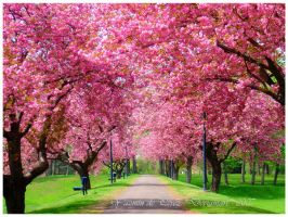 Spring in Pink by YazmindePerez