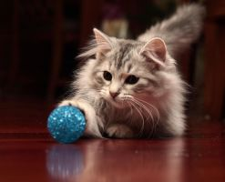 Kitten + Toy no. 1 by Mischi3vo