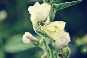 yellow butterfly by eyefish