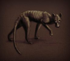 Dark thylacine by Illusir