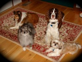 Sineni Dogs by Galaxys-Most-Wanted