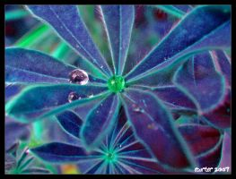 Morning Dew by carterr