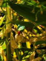 Green grass parrot by Juliemarie91